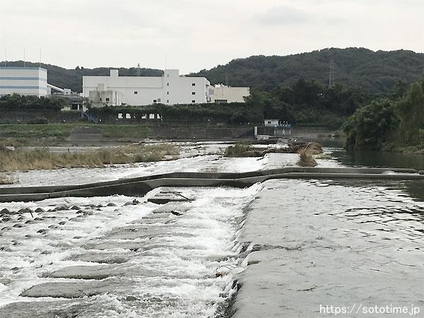 多摩川のスモールマウスバスポイント05