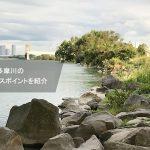 多摩川スモールバスポイントをロコアングラーが紹介【府中~登戸】写真あり
