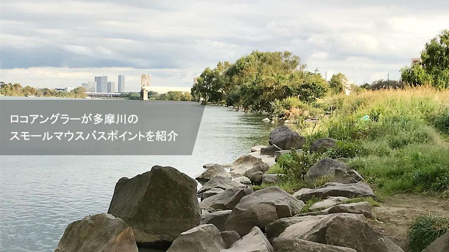 多摩川スモールバスポイントをロコアングラーが紹介