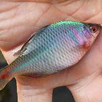 タナゴ釣りなら野池が狙い目!仕掛け・エサ・釣り方など徹底解説